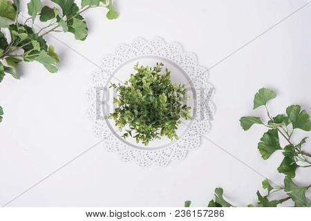 Tray Centered With Plant  And Leaves Flat Lay Top View