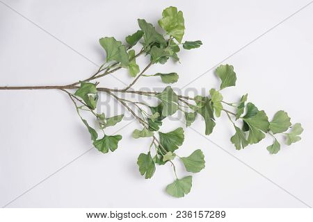 Green Tree Branch Flat Lay Top View White Background