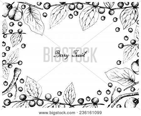 Berry Fruit, Illustration Frame Of Hand Drawn Sketch Of Jackal Jujube Or Ziziphus Oenoplia And Acero