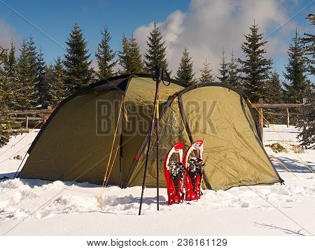 Camping During Winter Hiking In Mountains. Green Touristic Tent Under Spruces.