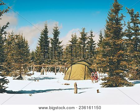 Tent In Winter Landscape. Trekking Tent, Poles, Red  Snowshoes On Snow Between Trees In The Mountain