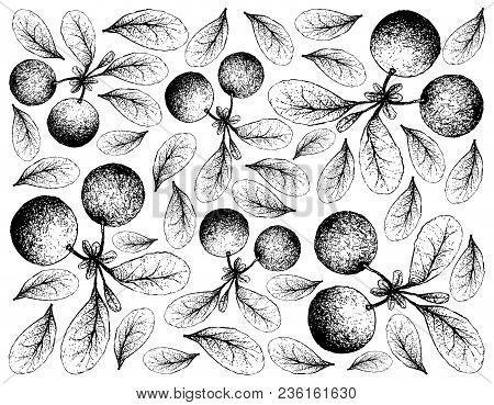 Berry Fruit, Illustration Wall-paper Background Of Hand Drawn Sketch Of Bog Bilberry Or Vaccinium Ui