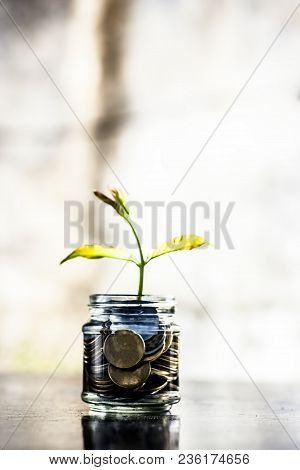 A Glass Jar Full Of Coins And Plant Growing Through It.  Concept Of Savings, Interest,  Fixed Deposi