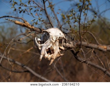 An Animal Skull Placed On A Branch As A Symbolic Warning To Keep Out Of The Area.