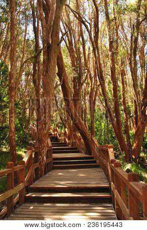 Wooden Path For Tourists In Arrayanes National Park, Villa La Angostura, Patagonia Argentina. Incred