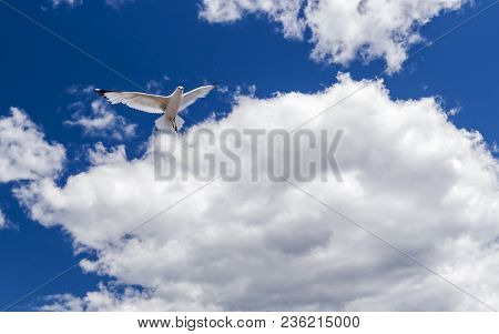 A Single Seagull Flies Over Canal Park In Duluth, Minnesota
