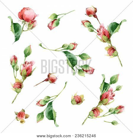 Big Set With Flowers, Twigs And Leaves Of Rose. Watercolor Illustration. This Set Is Well Suited For
