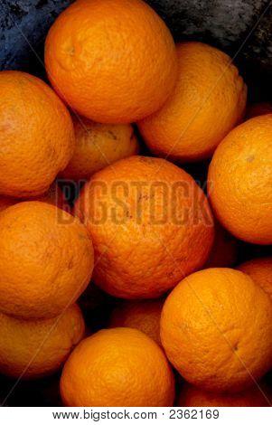 Oranges 204