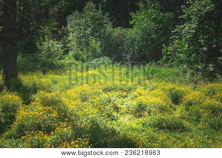 Landscape Photography Of Fresh Spring Forest Nature With Petal Yellow Flowers In Field, Natural Flor