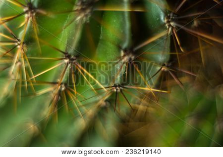 Cactus Echinopsis Tubiflora, Selective Soft Focus, Black Background
