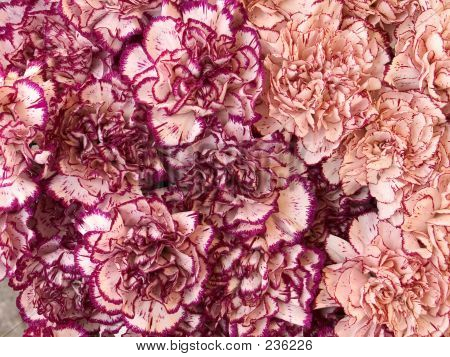 Carnations Background