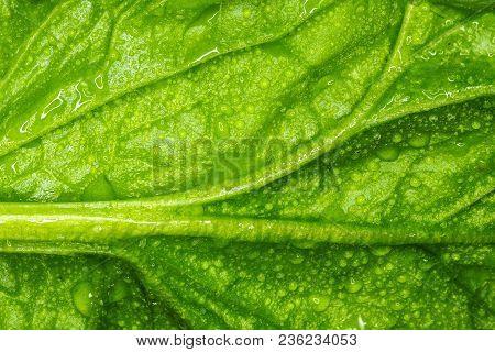 Spinach Macro Photo / Macro Photo Large Sheet Spinach Natural Texture