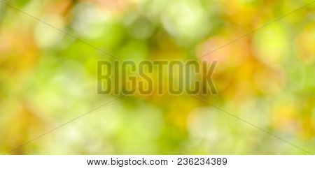 Green blurred background of tree leaves. Copy space