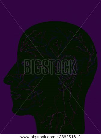Black Silhouettes Of A Man Head With Colorful Face Parts And Inner Bloodstream