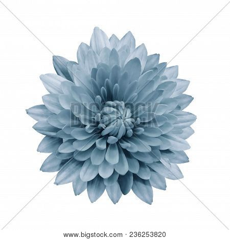 Light Turquoise  Flower Dahlia  On A White Isolated Background With Clipping Path.   Closeup.  No Sh