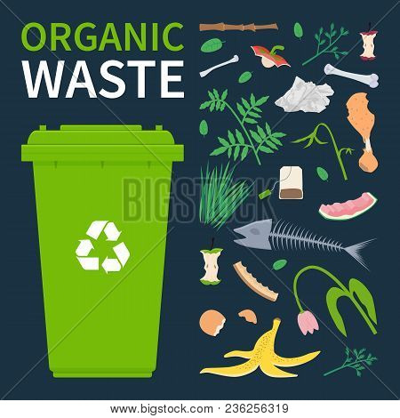 Bin For Recycling Organic Waste. Food Scraps And Leftovers, Cut Tree Brunch, Grass. Vector Illustrat