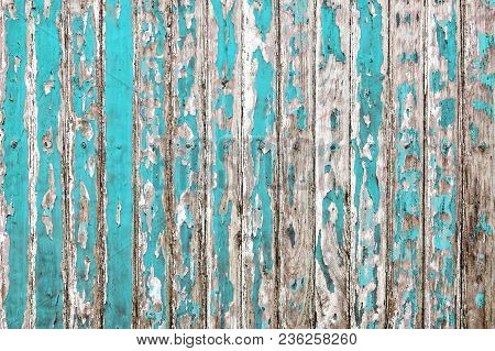 The Old Wooden Wall Painted With Cyan Color Cracking, Peeling And Revealed The Spike Nail And Rustic