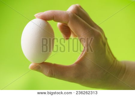 Hand Holding a of Raw Chicken Egg, Person Holding an White Egg, One Egg Delicious, Egg-Cooking Menu, Hand Shows a White Chicken Egg on a Green