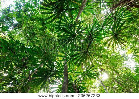 Lush jungle vegetation in a rainforest, Thailand