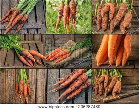 Collage With Fresh Carrot On Rustic Wooden Background. Photo Of Mixed Various Kinds Of Carrot