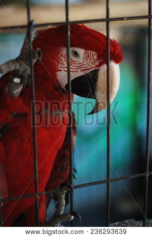 Colorful Parrot - Red Blue Orange Macaw At The Zoo