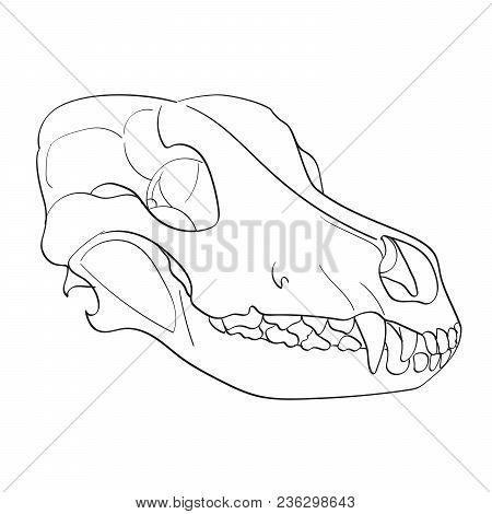 Object On White Background Skull Dog Sideways. Ccoloring For Children. Raster Illustration
