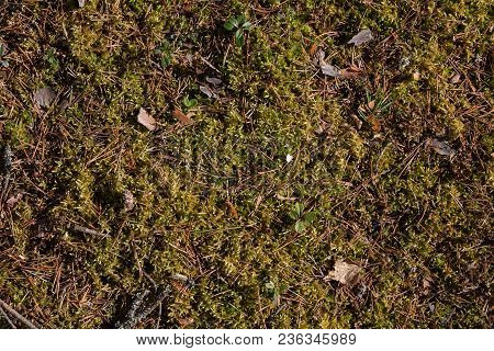 Moss Texture. Moss Background. Green Moss On Grunge Texture, Background