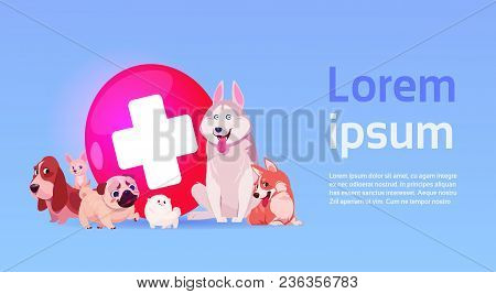 Group Of Happy Dogs Over Vet Clinic Icon Veterinary Medicine Concept Flat Vector Illustration