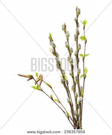 Spring Willow Branches And Birch Branch With Catkins And Fresh Green Leaves Isolated On White Backgr
