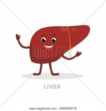 Strong Healthy Liver Cartoon Character Isolated On White Background. Happy Liver Icon Vector Flat De