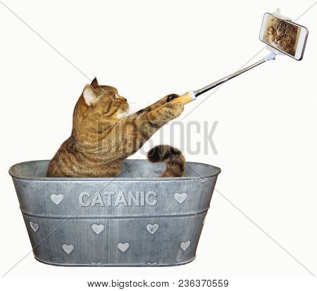 The Cat Takes Pictures Of Itself In A Wash Tub. White Background.