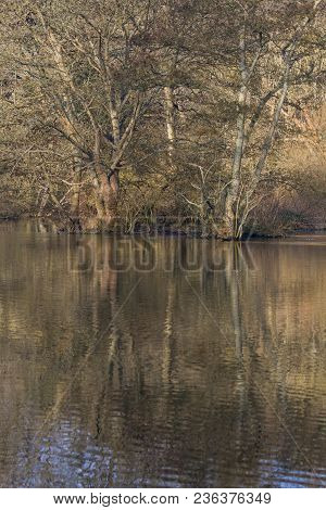 Landscape Photo Of Trees In Winter With Reflections In The Water