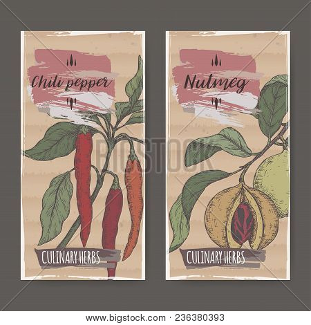 Set Of Two Labels With Nutmeg Aka Myristica Fragrans And Cayenne Pepper Aka Hot Chili Hand Drawn Col