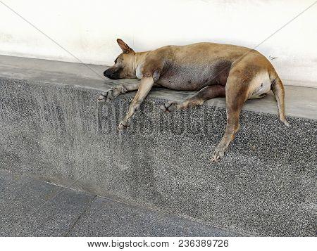 A Stray Dog Is Sleeping., Weak Dog.