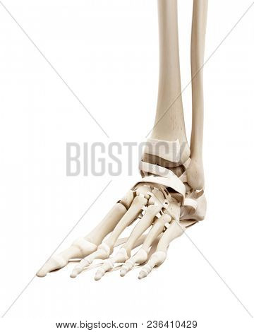 3d Rendered Medically Accurate Image Photo Bigstock