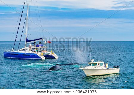 Provincetown, Cape Cod, Massachusetts, Us - August 15, 2017 Humpback Whale Between Two Small Ships
