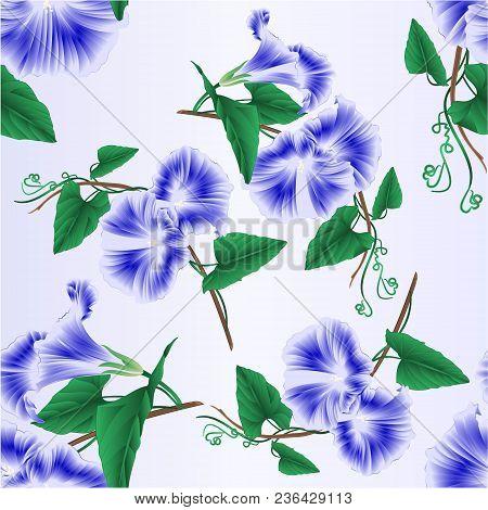 Seamless Texture Morning Glory  Blue Spring Flower Vintage Vector Illustration Editable Hand Draw