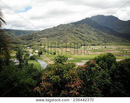 Taro (kalo) Fields Of Hanalei. Beautiful Imagery On The Island Of Kauai, Hawaii.