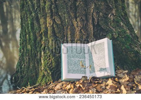 Open Book In Blue Bound Lying On A Dry Leaves. Background Texture Bark Tree In Spring Nature Forest