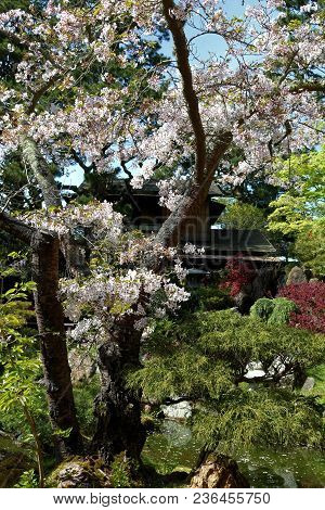 Deciduous Tree With Flower Blossoms During Spring Surrounded By Manicured Landscaping Taken At The Z