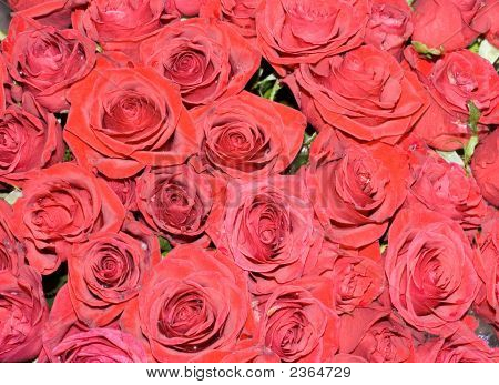 Big Bunch Multiple Red Roses Bride On A Wedding From Top, Of Bridal Photos Series