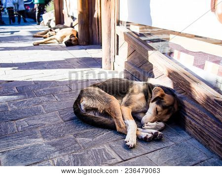 Street Dog Sleeping All Curled Up In The Shade, Next To Strong Sun. El Calafate, Argentina.