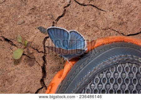Cute Copper-butterfly Is Sitting On A Sport Shoes. Concept Of Nature Conservation. Disturbed Land.