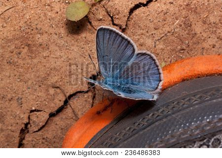 Cute Copper-butterfly And Disturbed Land. Concept Of Nature Conservation. Ecology.