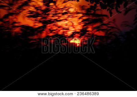 Blurred Bloody Sunset At Dusk With Red Silhouette Sky And Tree Leaves Background