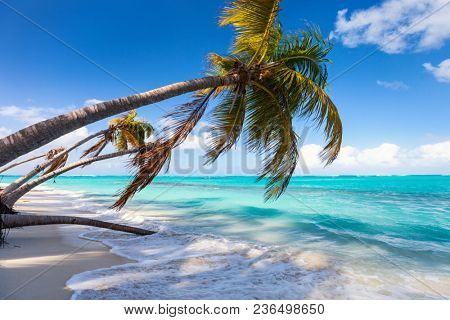 Beautiful beach framed with palms on Caribbean island of Anguilla