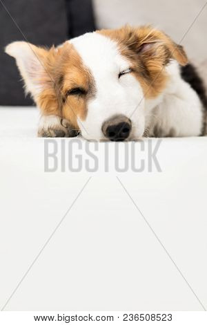 Cute Mixed Breed Puppy Dog Sleeping On The Couch, Copyspace
