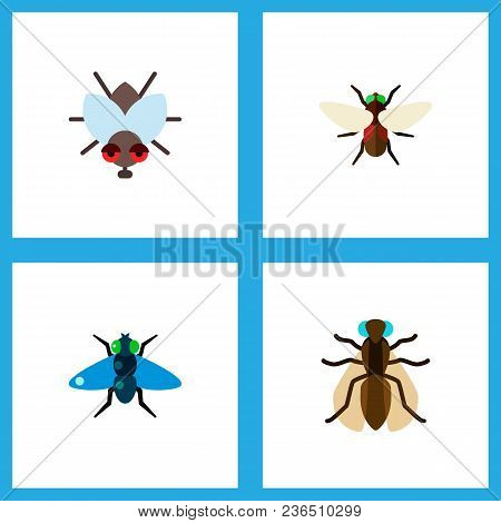 Icon Flat Buzz Set Of Bluebottle, Dung, Fly And Other Vector Objects. Also Includes Fly, Bluebottle,