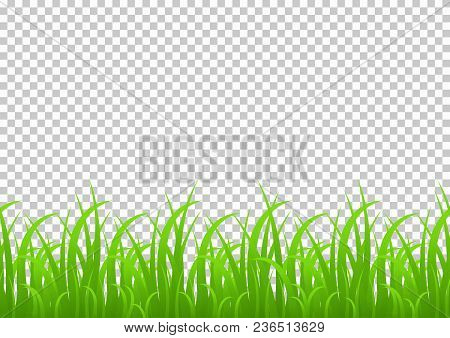 Grass Seamless Border, Vector Illustration Isolated On Transparent Background. Meadow, Greenery, Gra