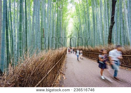 Kyoto, Japan - June 9: Unidentified People Visit The Famous Bamboo Forest, A Misterious Place In Kyo